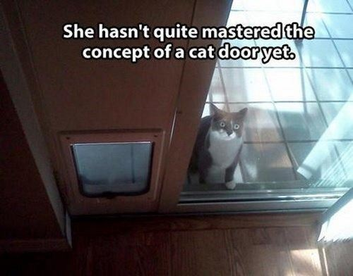 LOL pets (3 Photos) - MajorGeeks | 500 x 392 jpeg 28kB